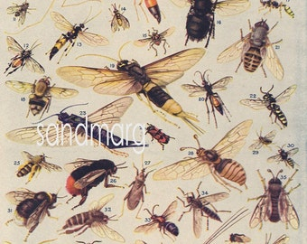 1922 Natural History Entomology Plate Insects Dragonflies Bees Ants and Flies