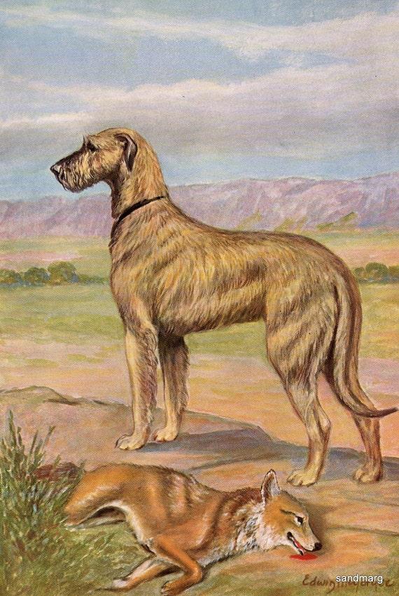 Vintage Dog Illustration Irish Wolfhound Hunting Print Edwin Megargee to Frame