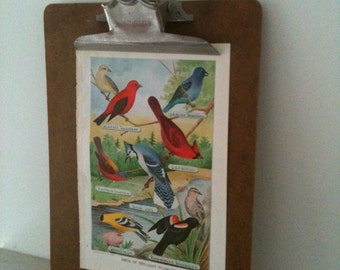 vintage BIRD print  - colorful and lovely