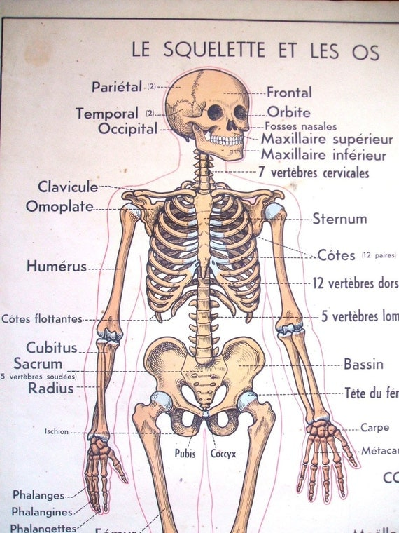 French Vintage School Poster Skeleton Medical Halloween