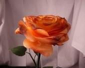 Peaches, a paper rose
