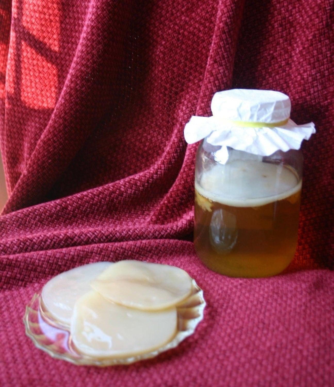 Kombucha Culture Mushroom Scoby ORGANIC Kombucha Mushroom (scoby) And Starter Tea