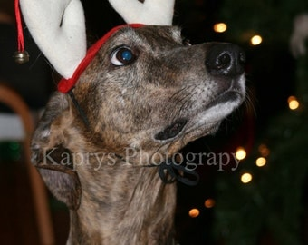 Kaprys Photography's Greyhound in Antlers, Pack of 10 Cards, 100% of sales go to greyhound adoption