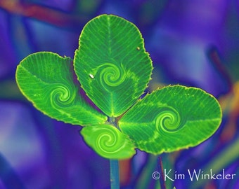 Four-Leaf Clover Altered Photograph ACEO