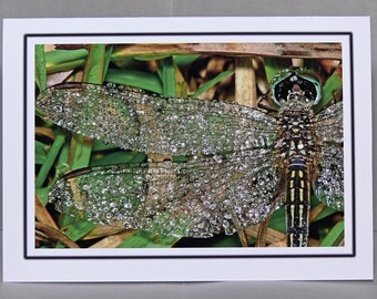 Dew Covered Dragonfly 5x7 notecard