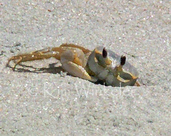 Ghost Crab ACEO Altered Fine Art Photograph