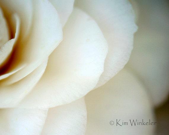 White Camellia Fine Art Photograph 8x10