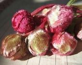 Vintage Millinery Velvet Hanging Deep Pink and Green Rosebud Cluster (24 buds)