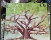 Louisiana Live Oak on Canvas - 8x10