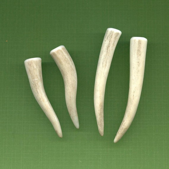 SALE Deer Antler Pair Tips Natural Shed Hand-Sanded SUPPLY Earrings, Jewelry, Bag Clasp TS31