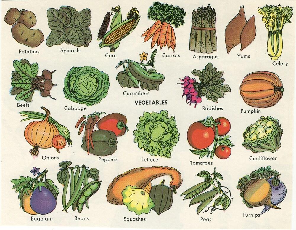 Vintage Encyclopedia Illustration Vegetables