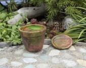 Miniature Garden Pot With Sedum Cuttings, Saucer Included