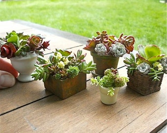 Sedum Cuttings for Miniature Garden Containers, Fairy or Gnome Garden Pots