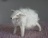 little white sheep in wool...