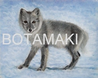 Artic Fox blank card