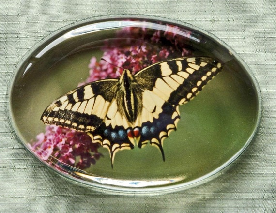 Butterfly Paperweight,English Swallowtail Butterfly,Original Photograph,Office Decor,Unisex Gift Idea for Spring