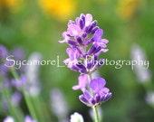 Sweet Lavender Card set---RESERVED for AMANDA