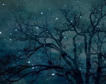 Starry tree....8x8 original fine art photograph