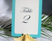 Natural Starfish Table Card Holder- Set of 10 and 1 unfinished Sandbox RESERVED
