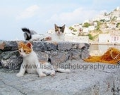 5x7 Fine Art Photograph Two Kittens of Hydra, Greece Harbour