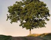 The Summer Tree - Fine Art Print, 8x10