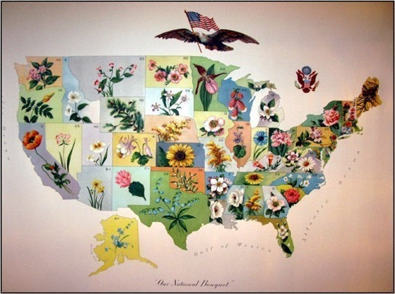 United States Map 100 Year Old Antique Vintage US State Flower Map