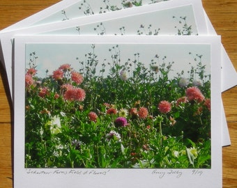 6 Cards, Schartner Farms Field of Flowers
