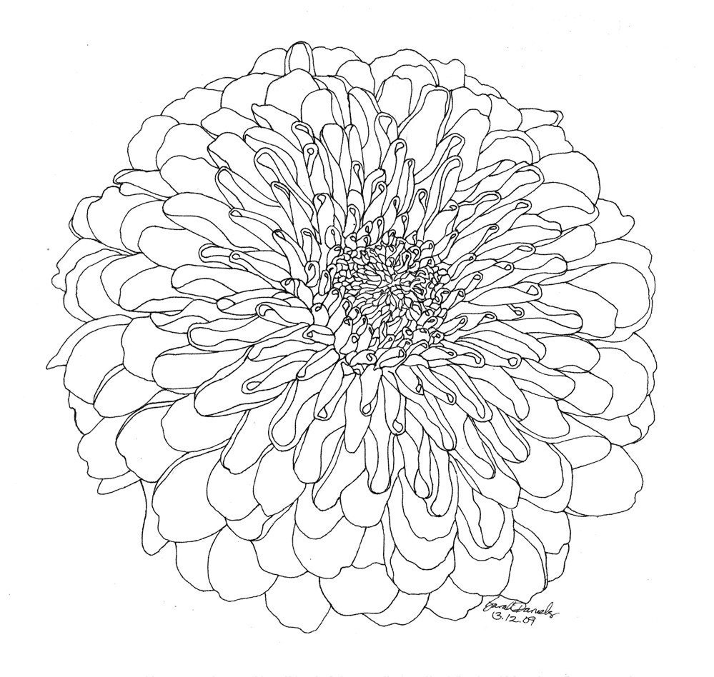 Drawing Red Lines With Green Ink : Chrysanthemum limited edition ink drawing