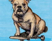 BULLDOG Shreddie Print 11x16.25 print signed and numbered. Backround color your choice (yellow, green, blue or pink).