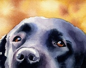 BLACK LAB Dog Signed Art Print by Artist DJ Rogers