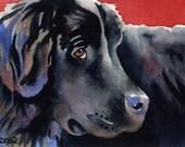 NEWFOUNDLAND Dog Art Print Signed by Artist DJ Rogers