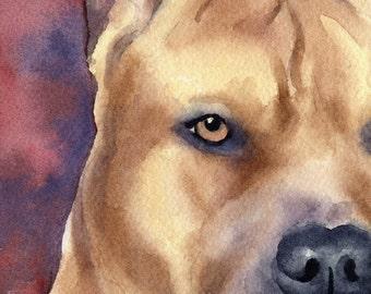 PIT BULL Terrier Art Print Signed by Artist DJ Rogers