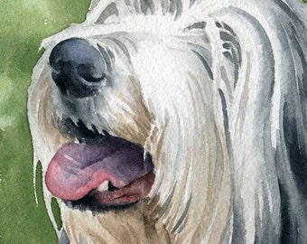 BEARDED COLLIE Dog Watercolor Signed Fine Art Print by Artist DJ Rogers