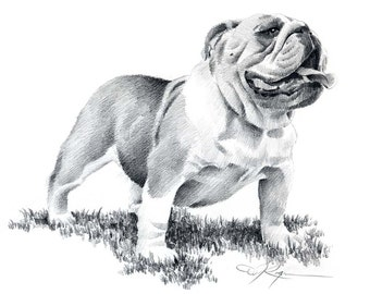 BULLDOG Pencil Drawing Art Print Signed by Artist DJ Rogers