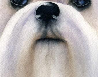 MALTESE Dog Watercolor Signed Fine Art Print by Artist DJ Rogers