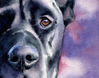 BLACK GREAT DANE Art Print Signed by Artist D J Rogers