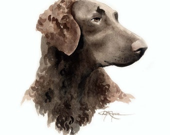 CURLY COATED RETRIEVER Dog Art Print Signed by Artist D J Rogers