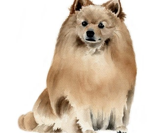 GERMAN SPITZ Dog Art Print Signed by Artist DJ Rogers