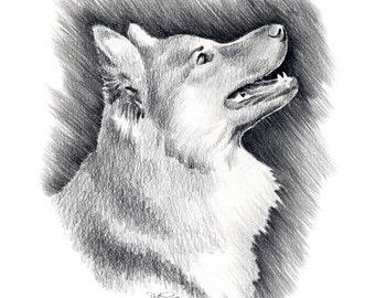 ICELANDIC SHEEPDOG Dog Art Print Signed by Artist DJ Rogers