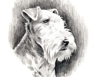 LAKELAND TERRIER Dog Pencil Drawing Art Print Signed by Artist DJ Rogers