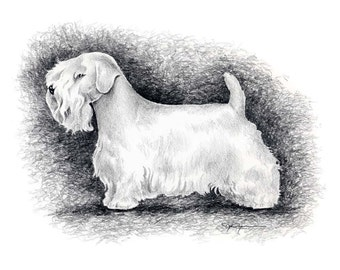 SEALYHAM TERRIER Dog Pencil Drawing Art Print Signed by Artist DJ Rogers
