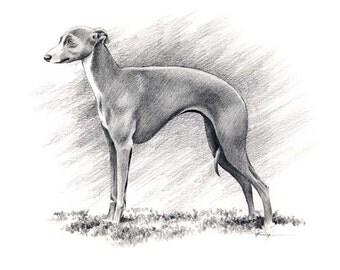 ITALIAN GREYHOUND Dog Art Print Signed by Artist DJ Rogers