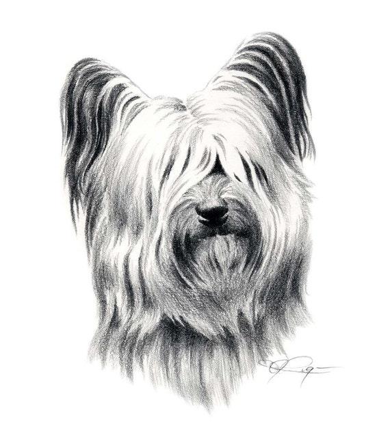 SKYE TERRIER Dog Pencil Drawing Art Print Signed by Artist DJ Rogers