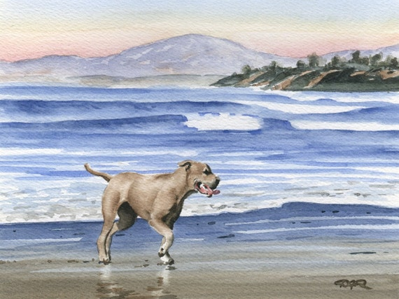 PIT BULL At The BEACH Dog Watercolor Art Print Signed by Artist D J Rogers