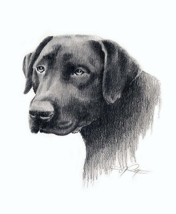 Perro labrador dibujo a lapiz - Imagui