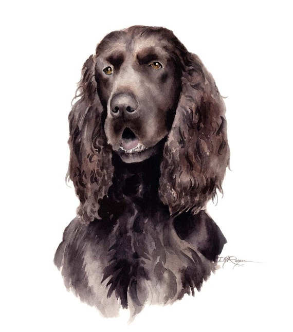 FIELD SPANIEL Dog Art Print Signed by Artist DJ Rogers