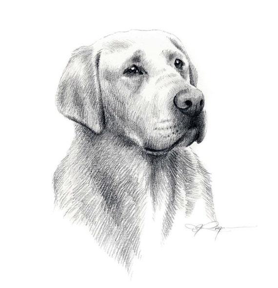 LABRADOR RETRIEVER perro lpiz dibujo lmina firmada por