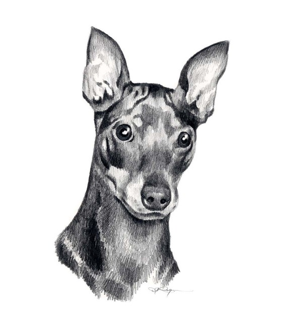 From List Of Names In Colo A Mini Portrait Of Lives: MINIATURE PINSCHER Dog Pencil Drawing Art Print By