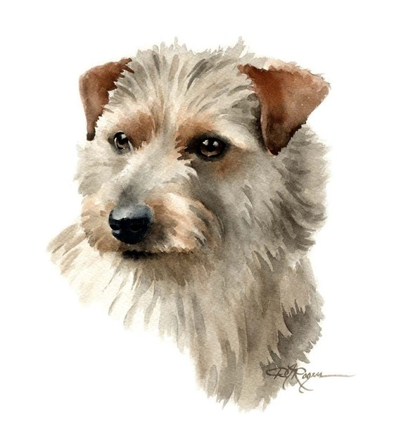 NORFOLK TERRIER Dog Watercolor Painting Art Print Signed by Artist DJ Rogers
