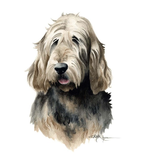 OTTERHOUND Dog Watercolor Painting ART Print Signed By Artist DJ Rogers
